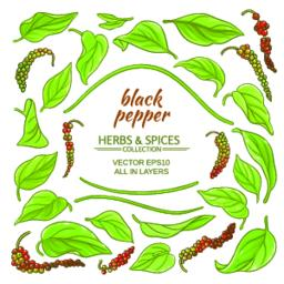 black ground pepper elements set Vector