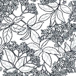 elderflower seamless pattern Vector