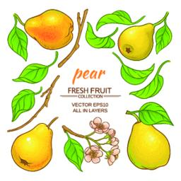 pear elements set Vector