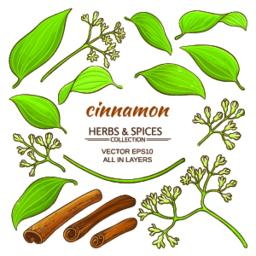 cinnamon elements set Vector