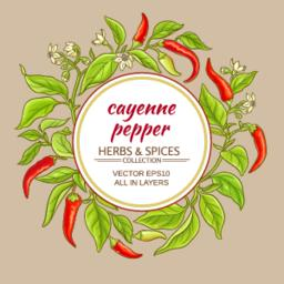 cayenne pepper frame Vector
