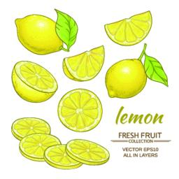 lemon vector set Vector