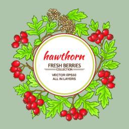 hawthorn vector frame Vector