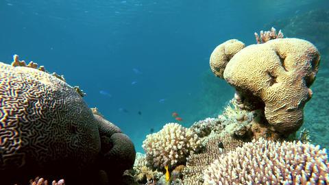 Snorkeling, Lagoon, Clear water Footage