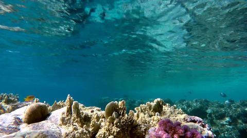 Marine, Water, Underwater, Ocean, The beauty of the underwater world Footage