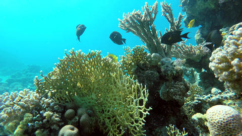 Beautiful coral reef. Fish, Underwater Live Action