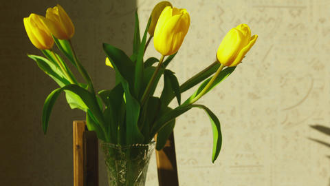 Faded yellow tulip buds raised Footage
