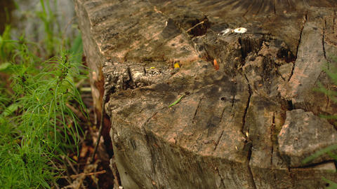 ants crawling on the stump Live Action