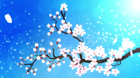 Cherry tree in full bloom, Blue CG動画