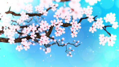 Cherry tree in full bloom, Blue, Loop CG動画
