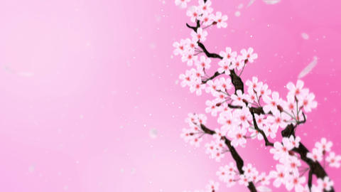 Cherry tree in full bloom, Loop, Pink Animation