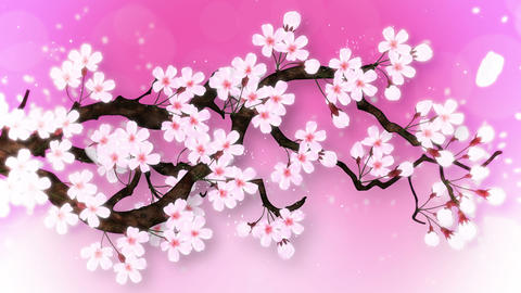 Cherry tree in full bloom, Pink CG動画