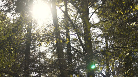 Early morning sun comes up through trees at sunrise Footage
