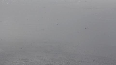This Is Arctic cold foggy Barents sea, drift ice and thousands of flying birds Footage