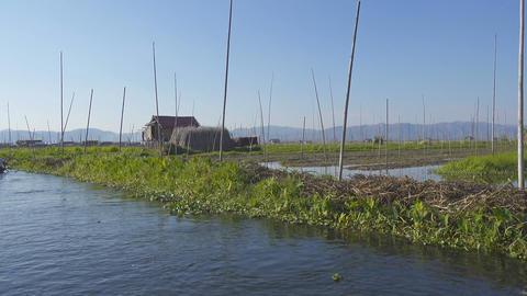 People canoe in floating gardens on Inle Lake Footage
