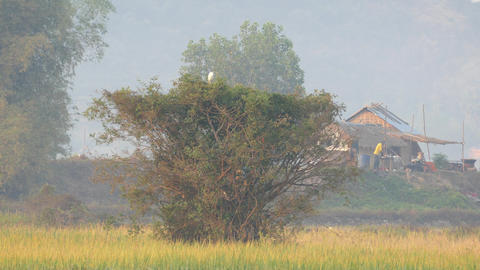 Misty Morning At The Countryside Of Cambodia stock footage