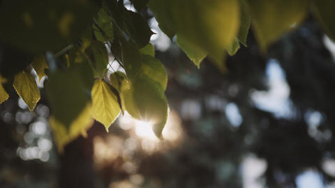 Sun's rays breaking through the leaves of the tree Footage