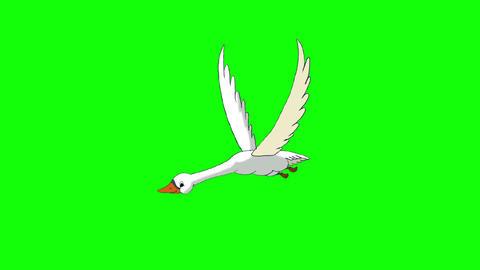 White Swan Flies Chroma Key Animation