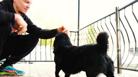 Caucasian man stroking a black dog, 4k Live Action