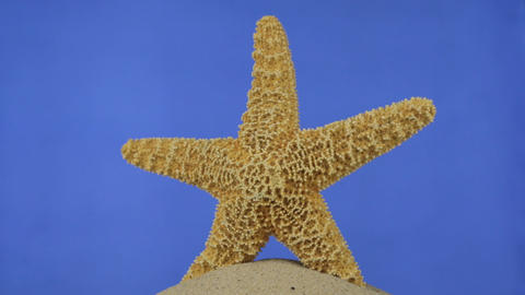 Rotation of the starfish lying on the sand. Isolated Live Action