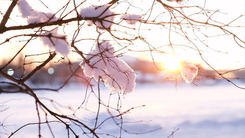 Woman hand in a mitten shakes the snow from a branch at sunset, slow motion Footage