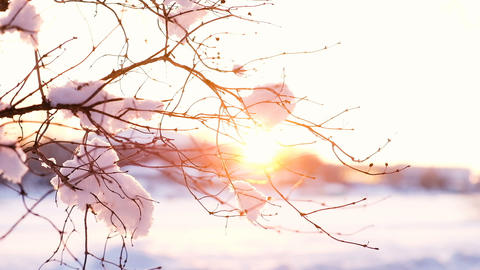 Sunset rays shine through the snowy branch, slow motion Footage