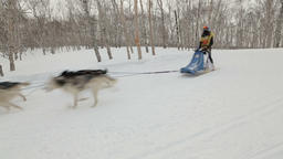 Kamchatka Sled Dog Race Beringia, Russian Cup of Sled Dog Race (snow Footage