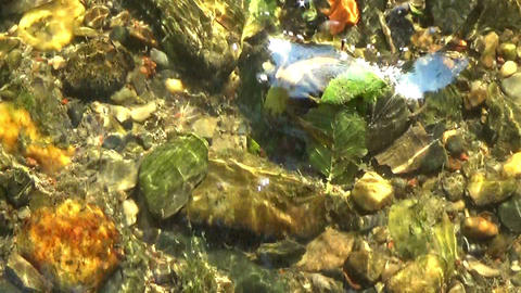 Sun glitters on a water stream, rocks at the bottom and fallen leaves downstream Footage