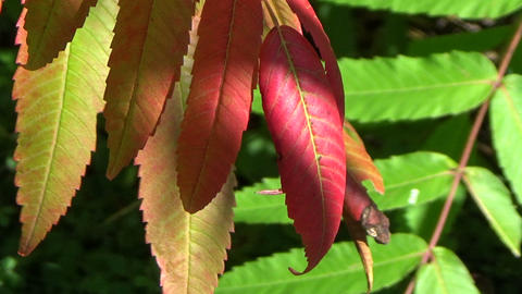 Closeup of a colourful tree branch in the forest Footage