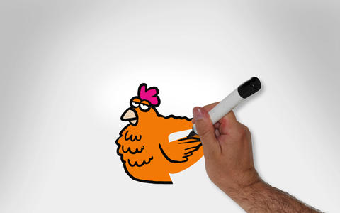 Whiteboard colour Chicken Animation