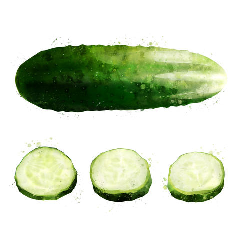 Cucumber on white background. Watercolor illustration フォト