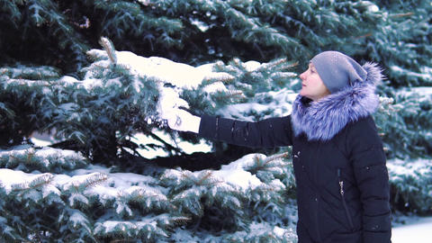 slow motion, snow falls from trees in a snow-covered winter park Footage