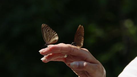 Happy woman holding butterfly Footage