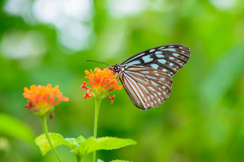 Blue butterfly fly in morning nature Photo