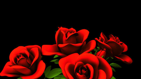 Red Roses Bouquet On Black Text Space Animation