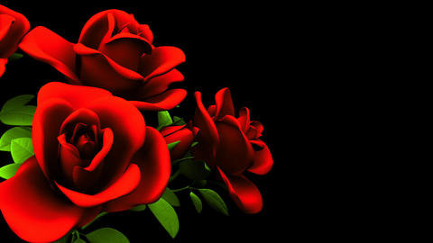 Red Roses Bouquet On Black Text Space CG動画