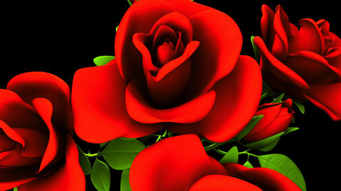 Red Roses Bouquet On Black Background 動画素材, ムービー映像素材