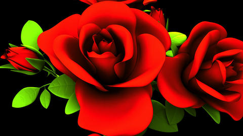 Red Roses Bouquet On Black Background CG動画