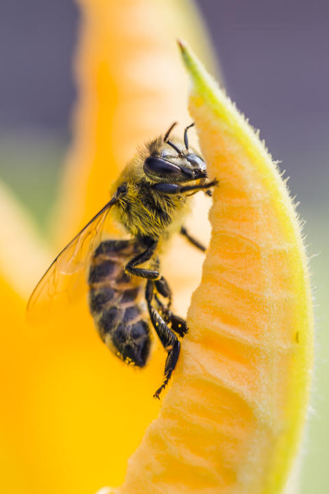 Close up of bee on flower フォト
