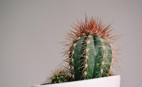 Little Cactus Close Up Photo