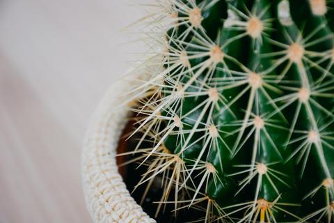 Close Up Cactus Detail 1 Photo