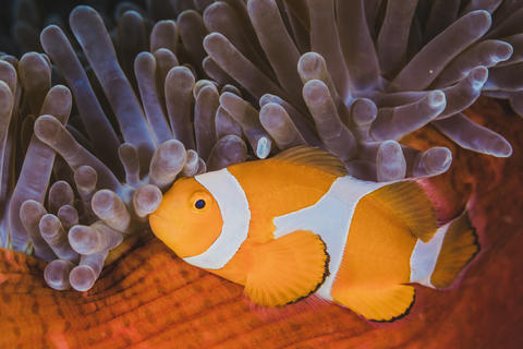 Finding Nemo Photo