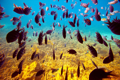 tropical fishes on coral reef Photo