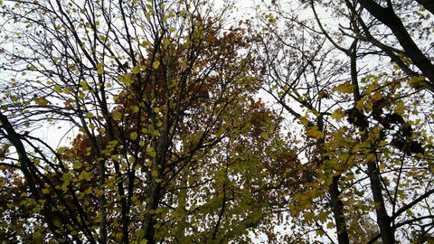 4K Falling Leaves Lowangle Autumn Scene 1 ライブ動画