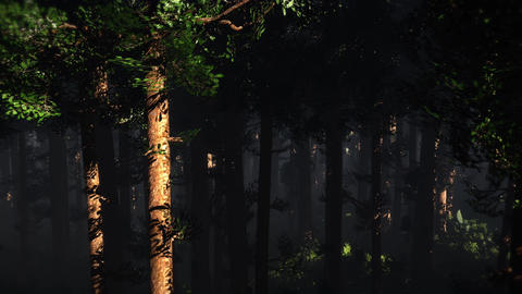 4K Epic Evergreen Forest Aerial 3D Animation 2 Animation