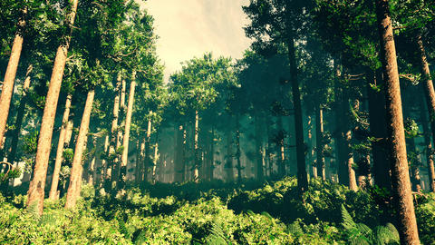 4K Epic Evergreen Forest Cinematic 3D Animation 1 Animation