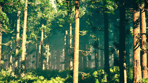 4K Epic Evergreen Forest Cinematic 3D Animation 4 Animation