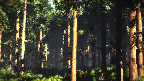 4K Epic Evergreen Forest Cinematic 3D Animation 5 Animation