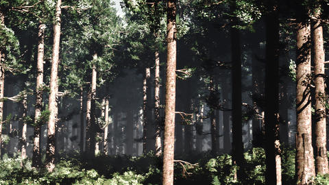4K Epic Evergreen Forest Cinematic 3D Animation 6 Animation