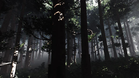 4K Epic Evergreen Forest Cinematic 3D Animation 9 Animation